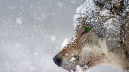 animal-carnivorous-cold-326097