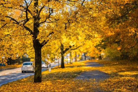 autumn-autumn-colours-cars-262113