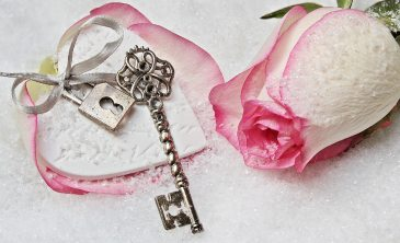 bloom-blossom-close-up-235941