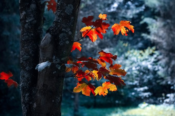 autumn-autumn-leaves-blur-589840